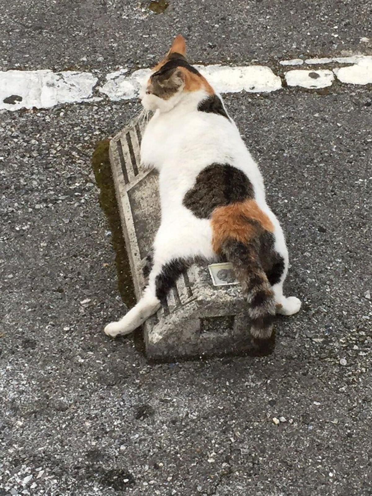 gatto si stira