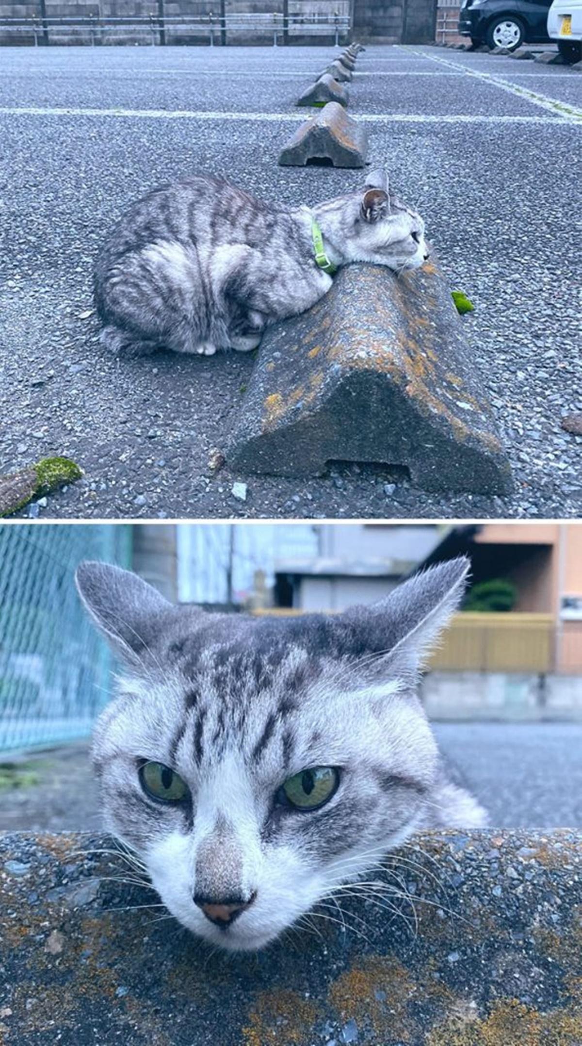 gatto poggia testa