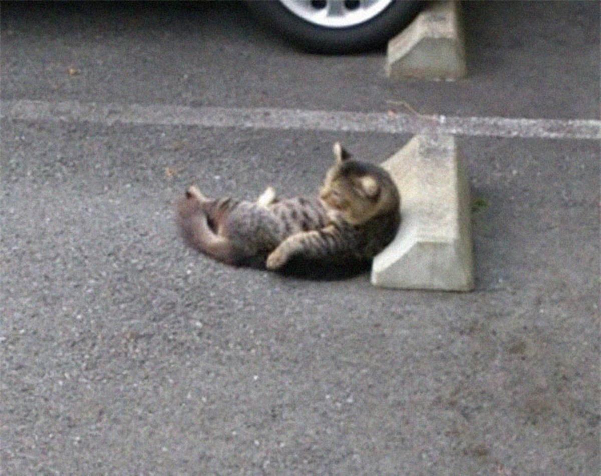 gatto si addormenta