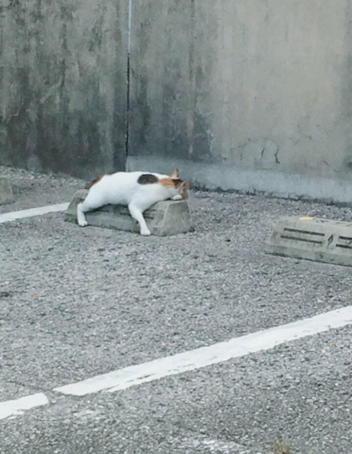 gatto abbraccia paraurti