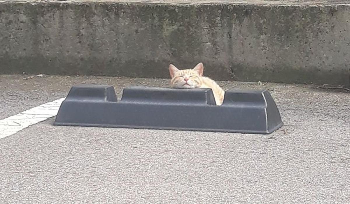 gatto con testa su paraurti