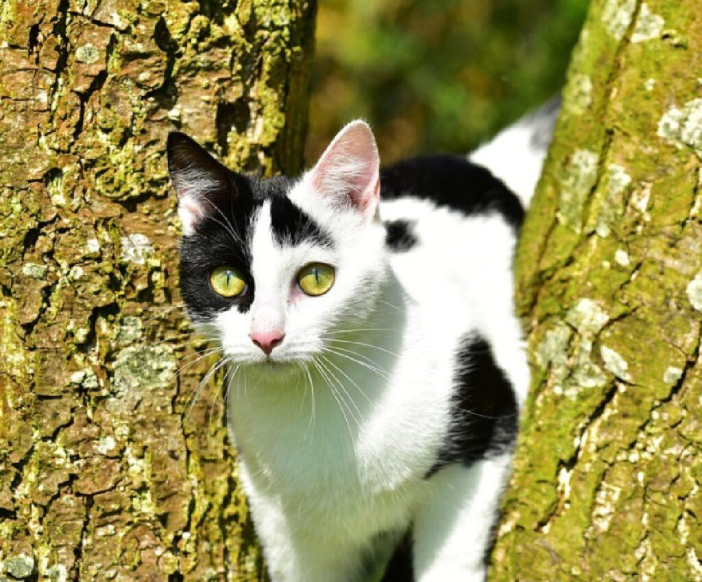 gatto peste fra due tronchi