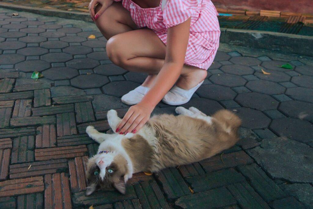 ragazza accarezza il gatto sulla pancia