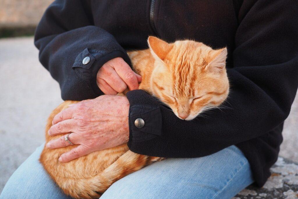 signore tiene un gatto in braccio