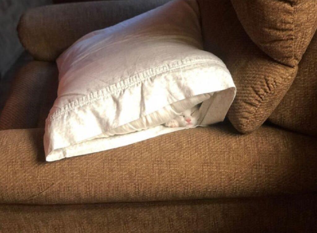 gatto cuscino bianco pelo
