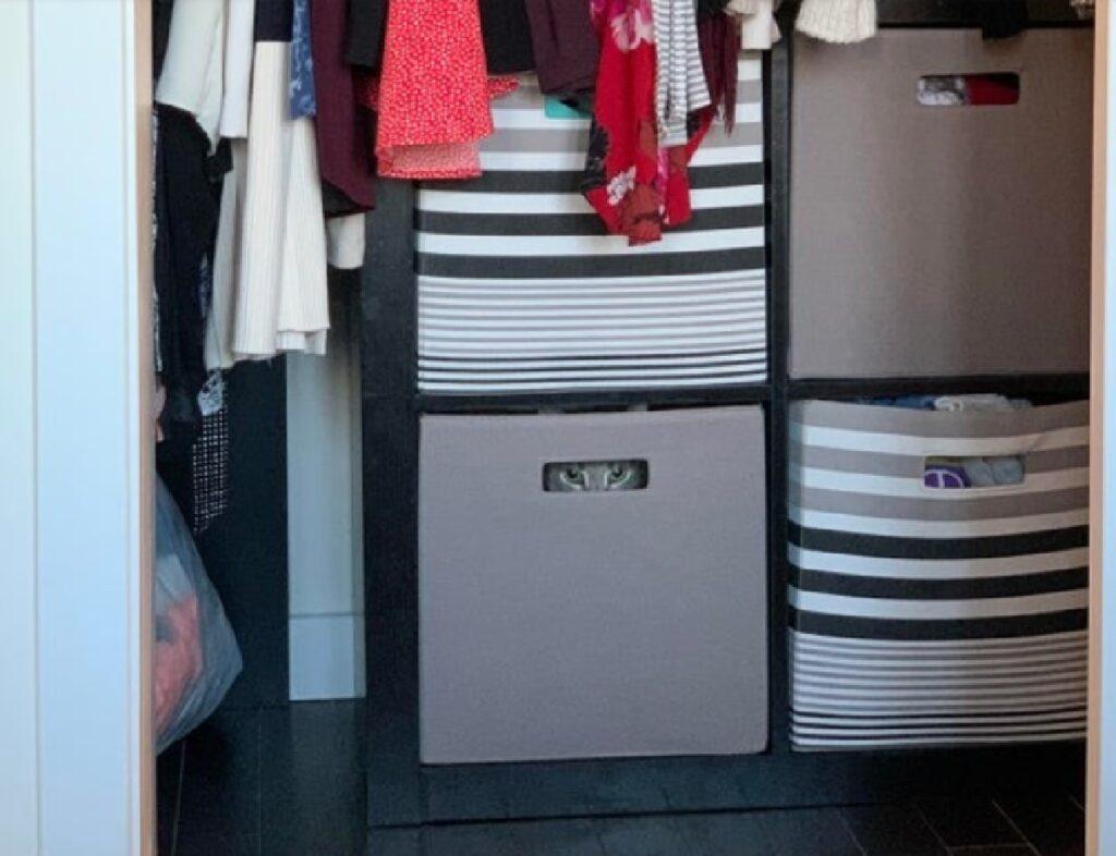 gatto dentro armadio vestiti