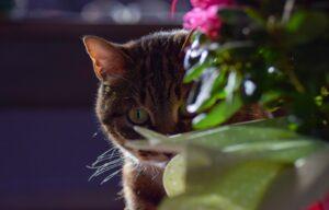 dove sei finito gatti nascondiglio ambiente