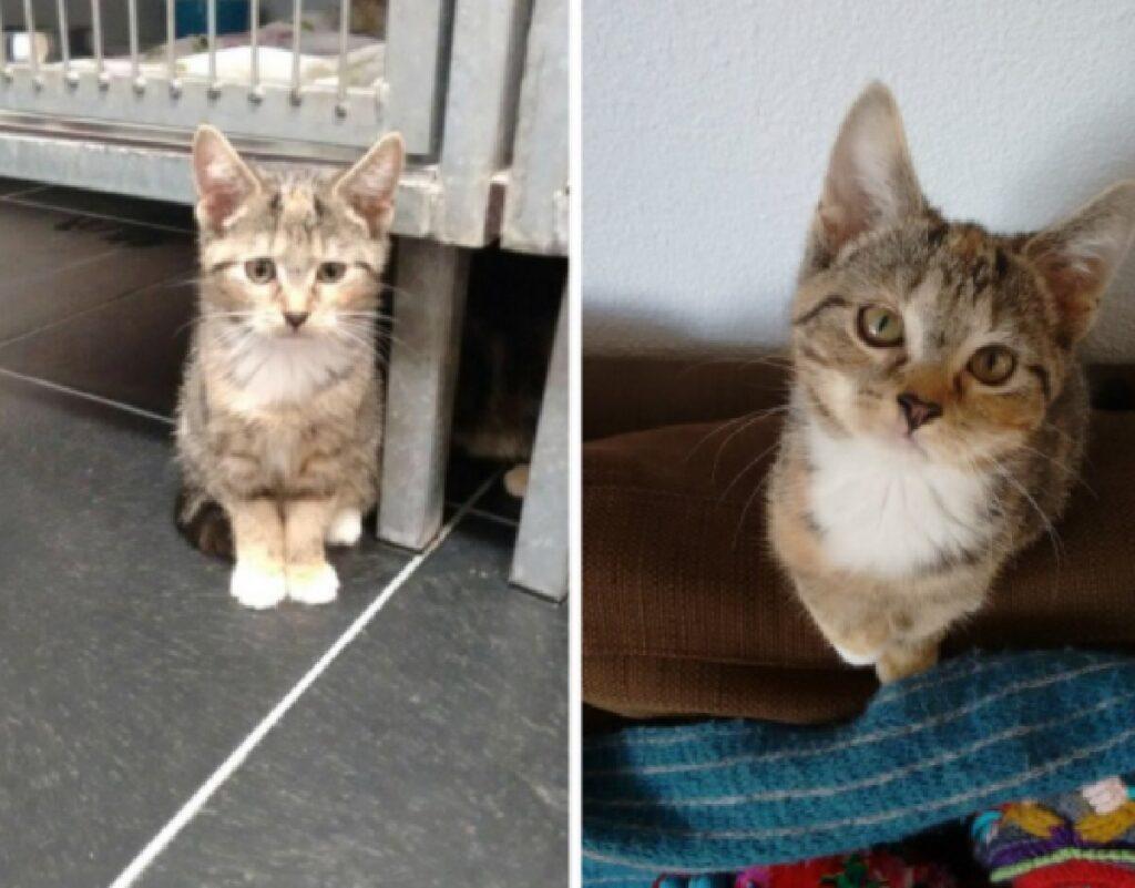 gatto in rifugio viene adottato