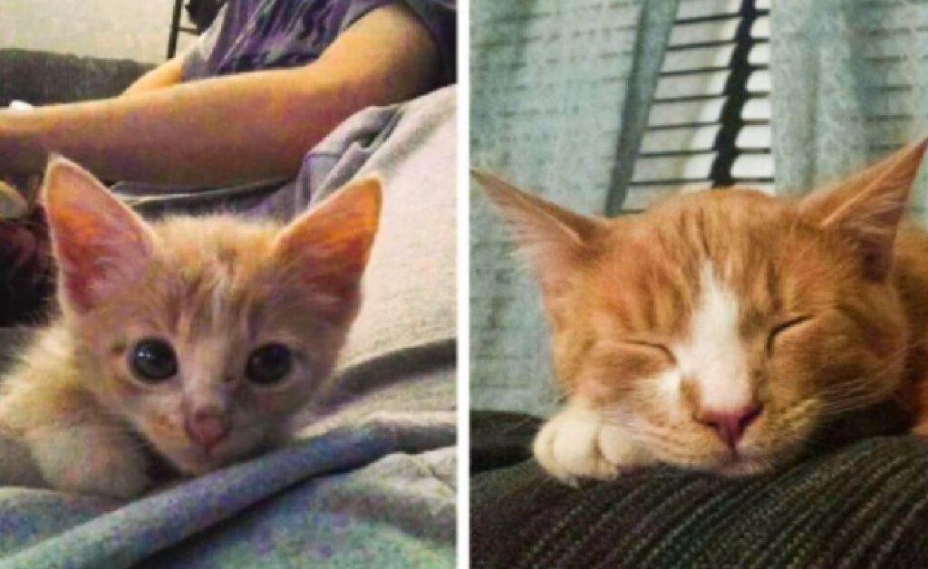 gatto prima dal veterinario