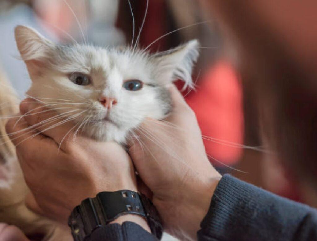 gatto coccole dopo essere adottato
