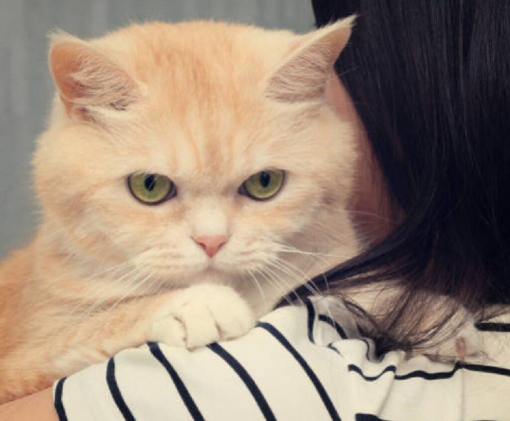 gatto abbraccio mamma nuova famiglia