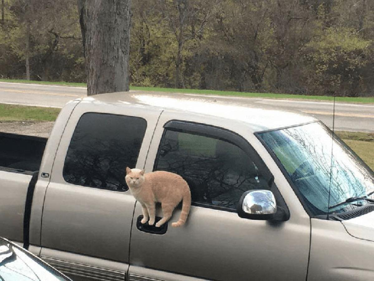 gatto sulla maniglia