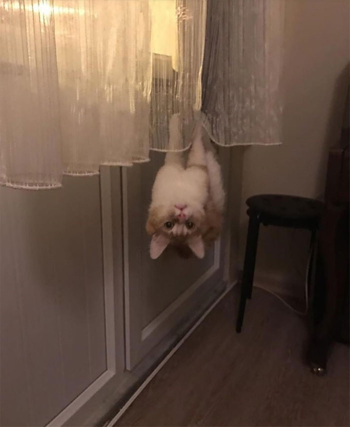 gatto sottosopra
