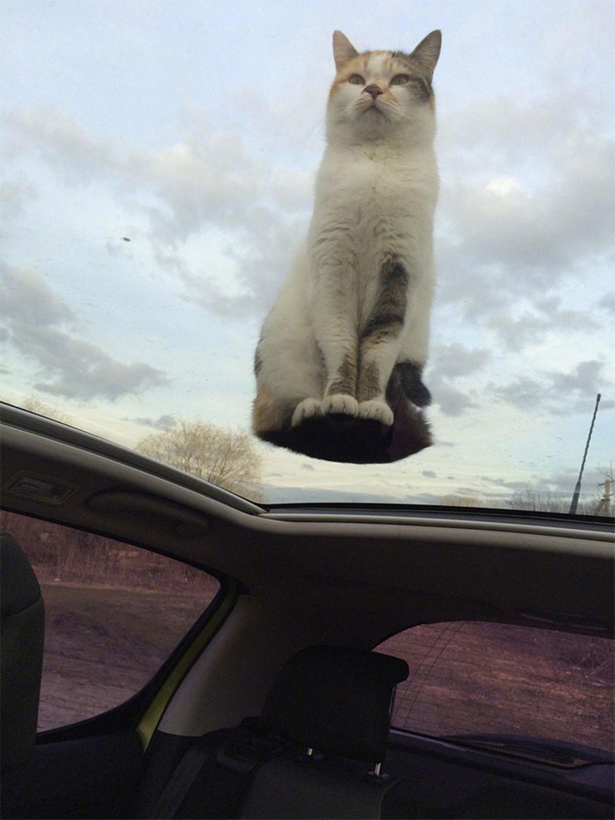 gatto sospeso