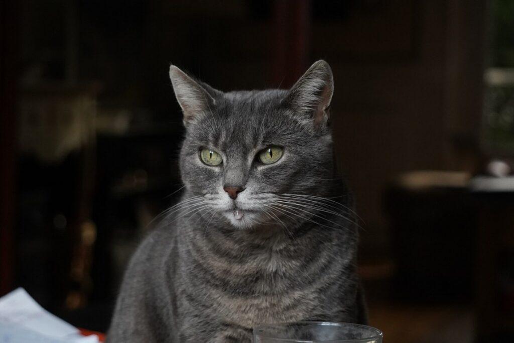 gatto con il muso bagnato