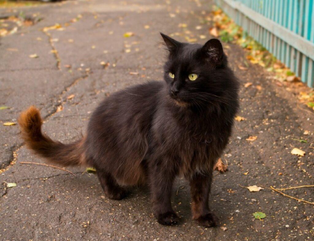 gatto nero su strada piena di foglie