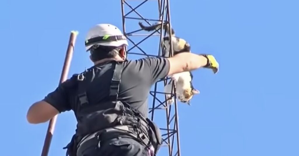 pompiere salva gatta su traliccio