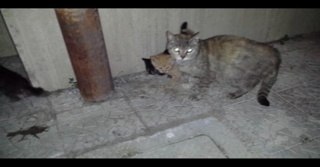 gatta e gattini