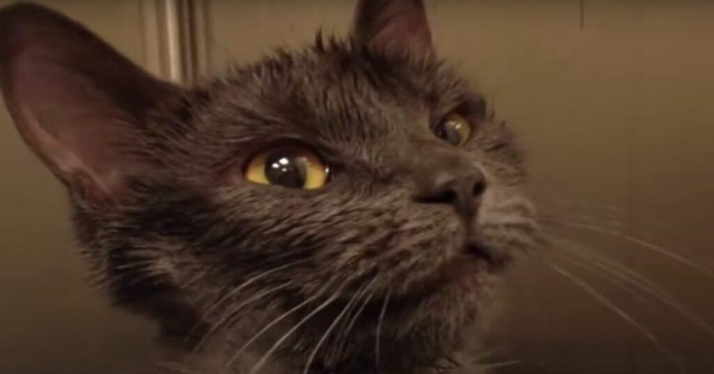 gatta salvata nell'immondizia