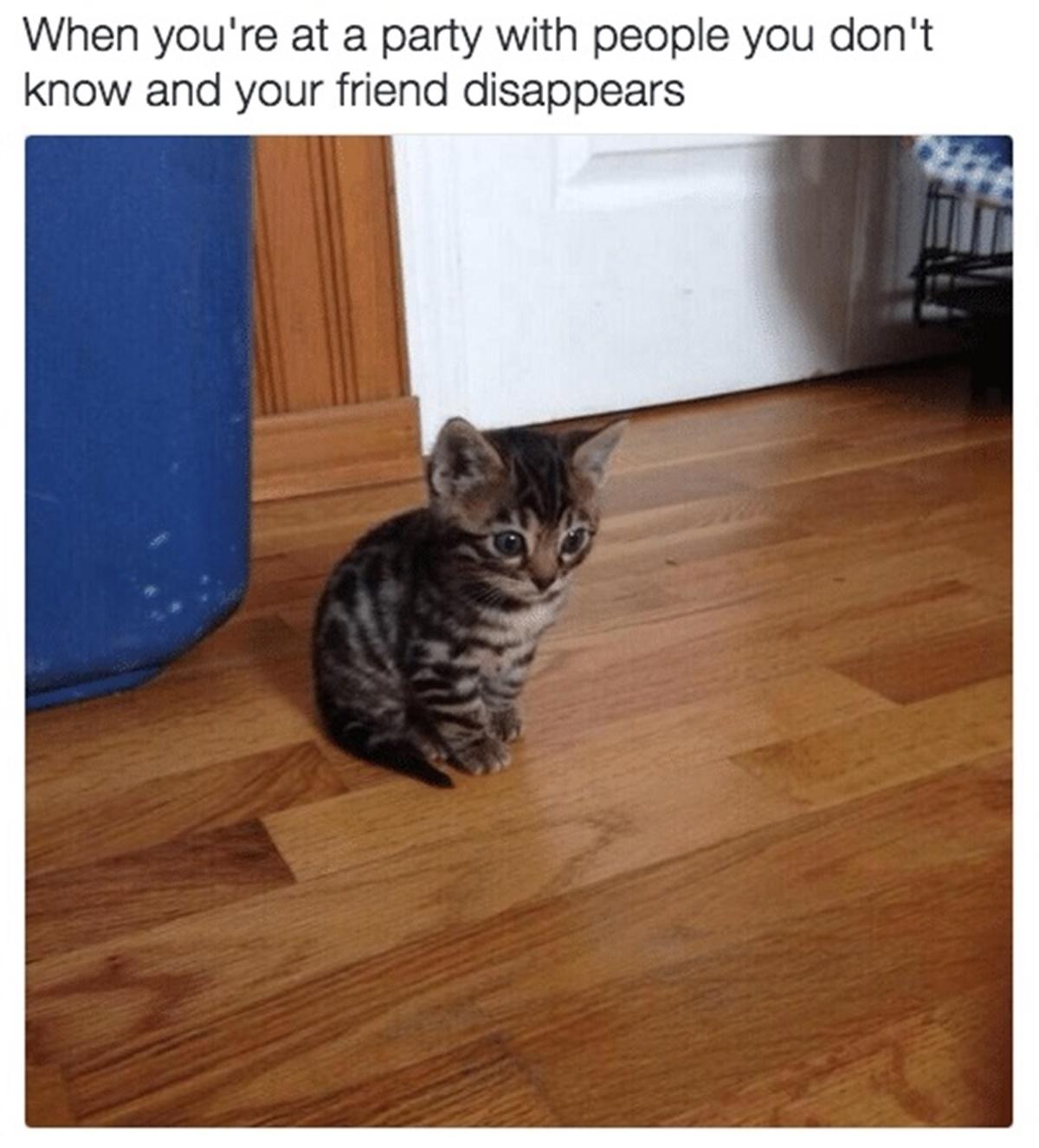 gatto stupito