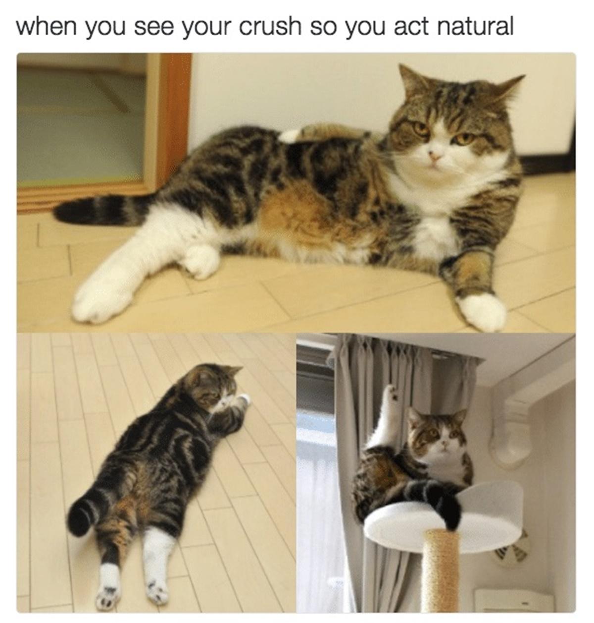 gatto si atteggia