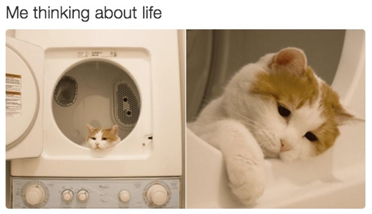 gatto pensa