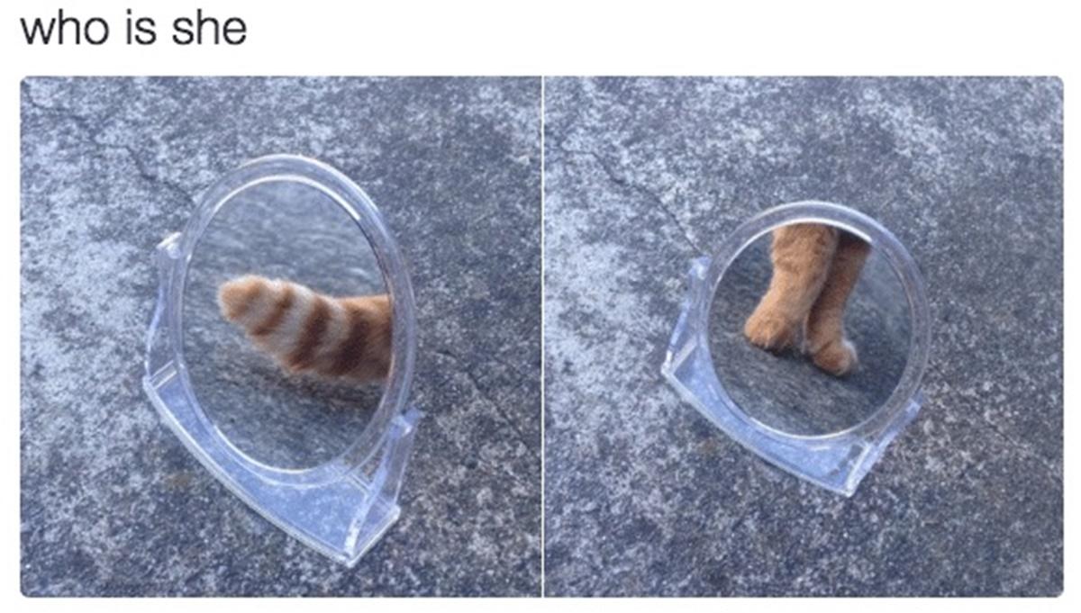 gatto diva