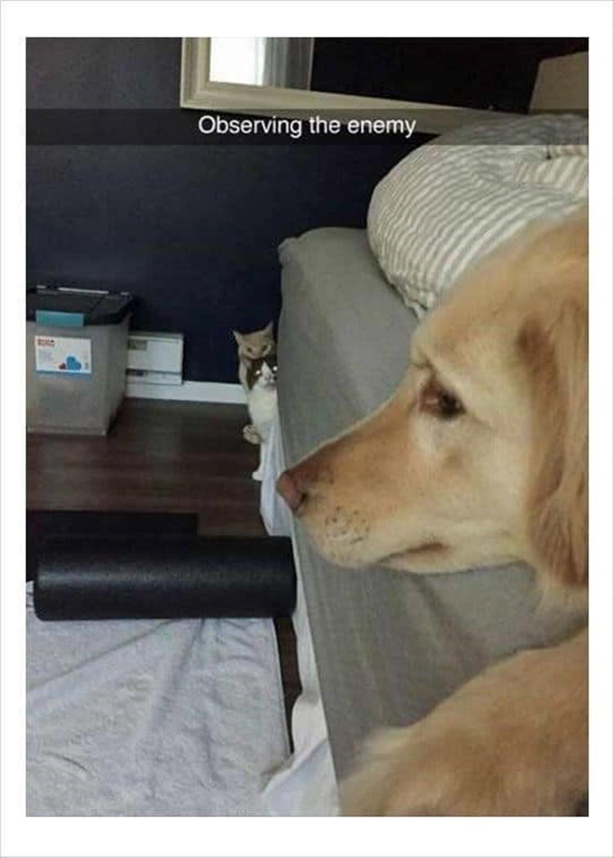 gatti osservano cane