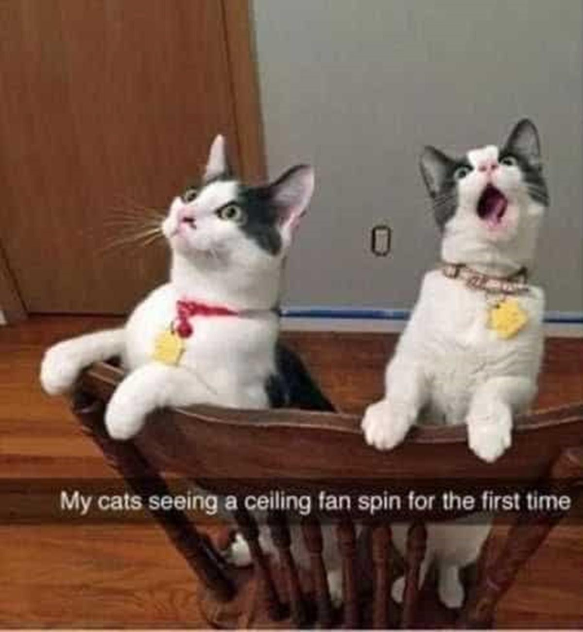 gatti spaventati