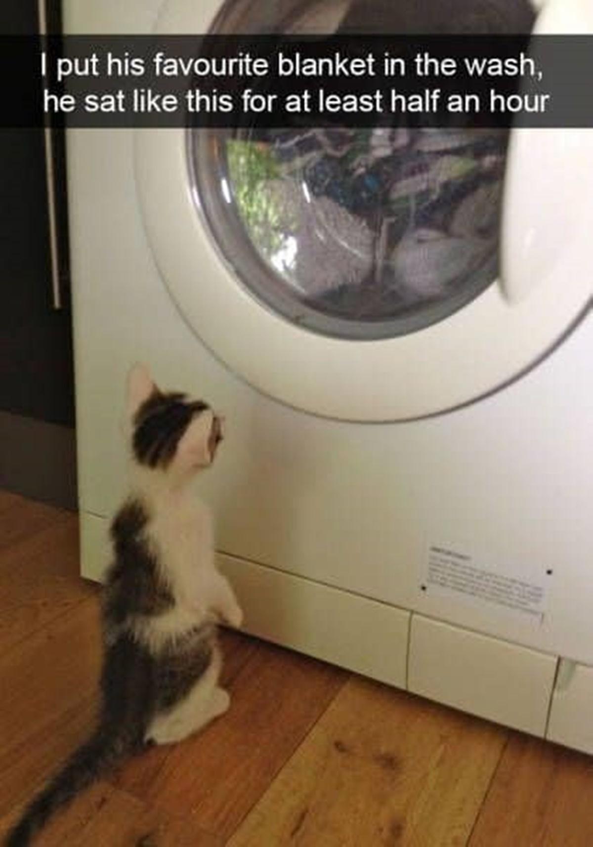 gatto guarda lavatrice