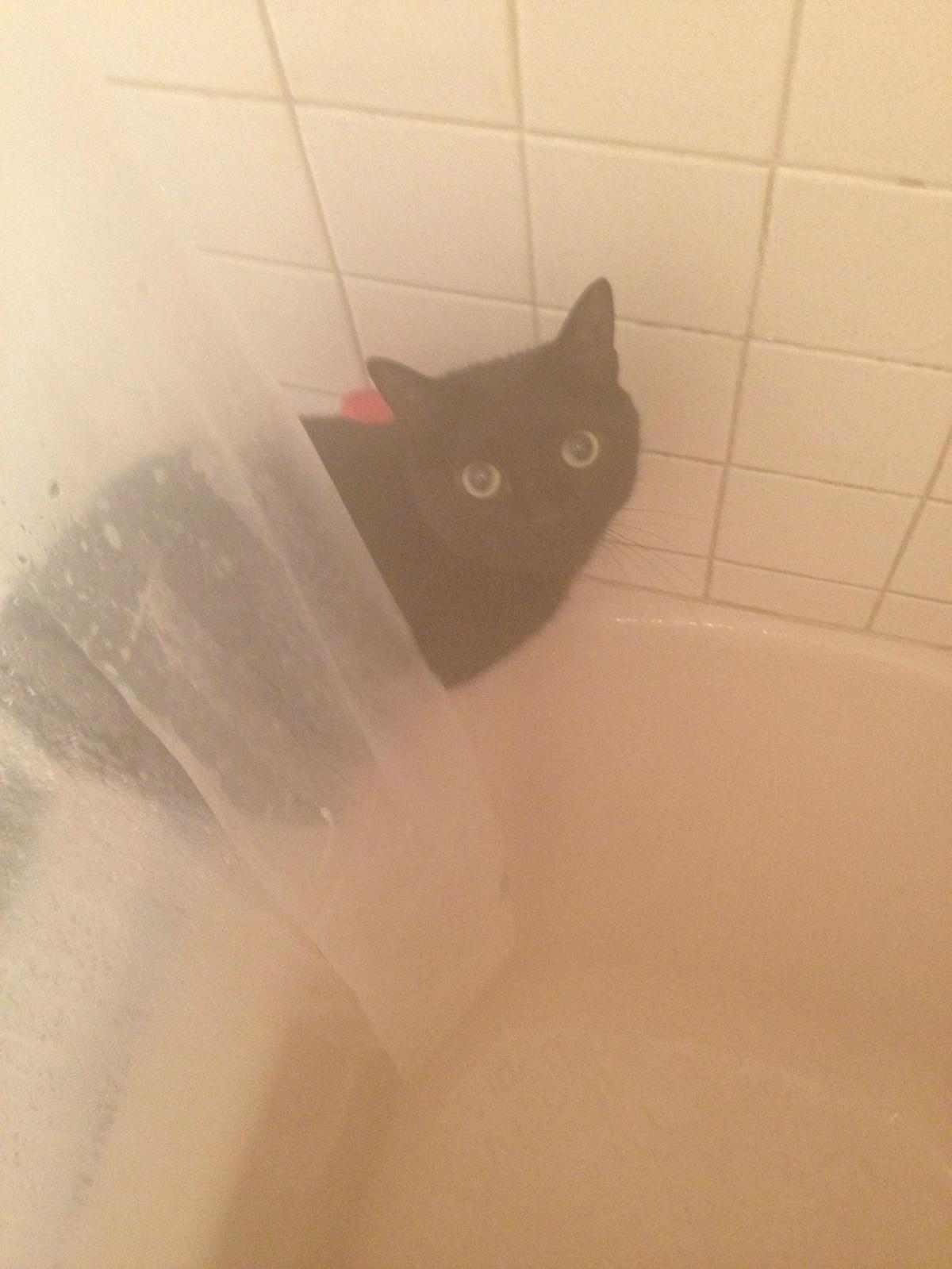 gatto ti spia in doccia