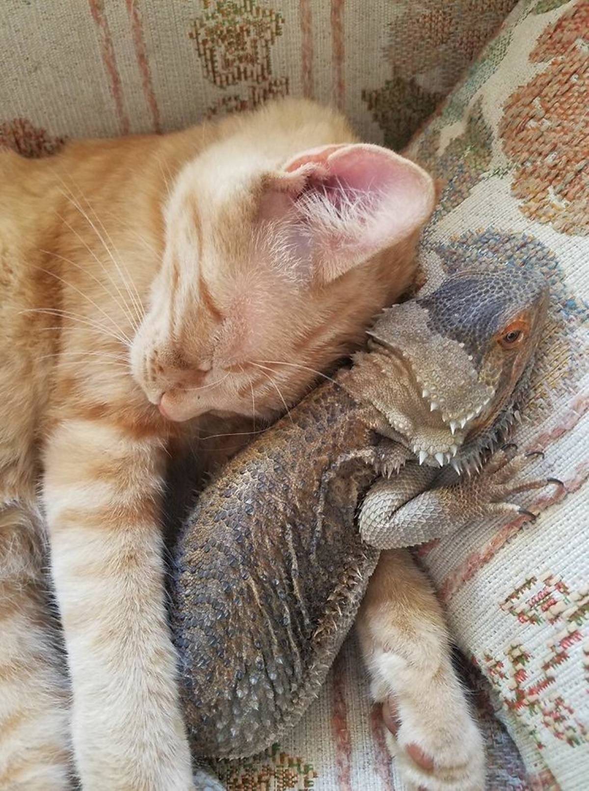 amichetti dormono