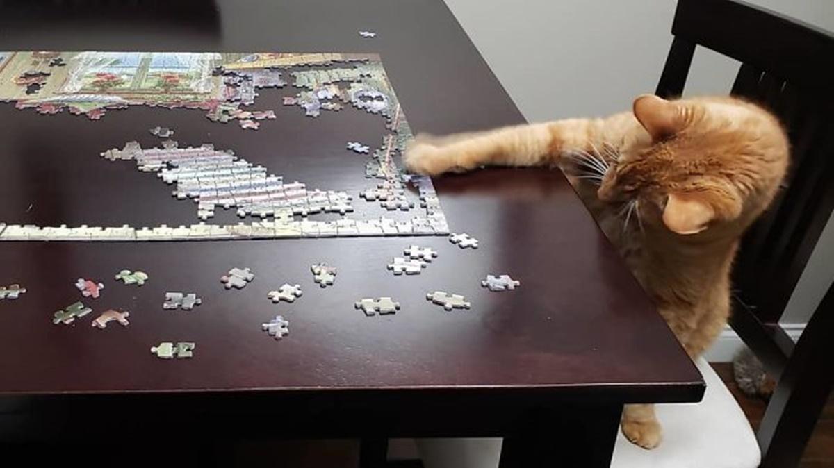 gatto mette pezzi puzzle