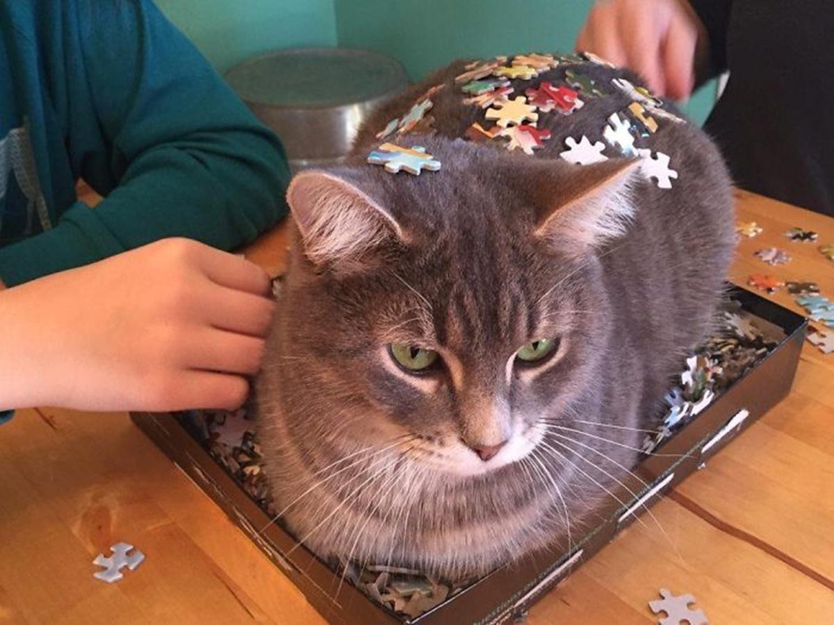 gatto 3d