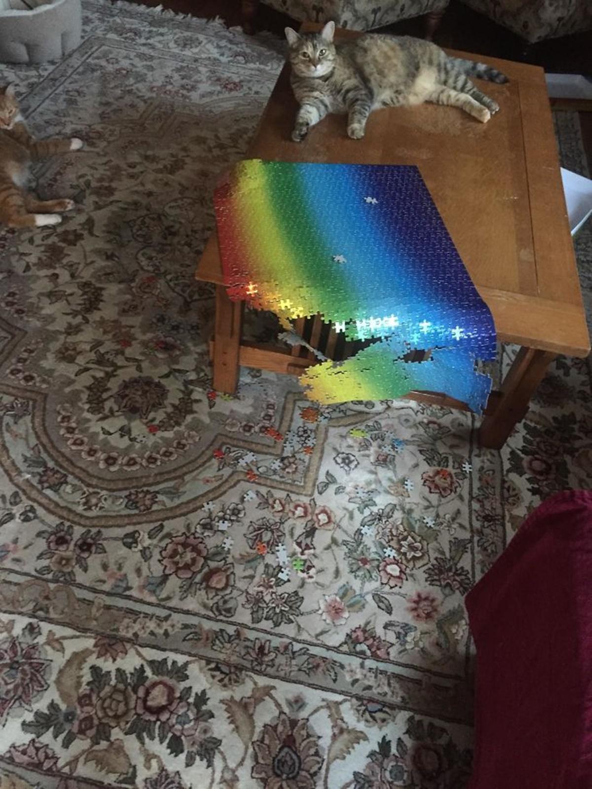 gatto puzzle arcobaleno