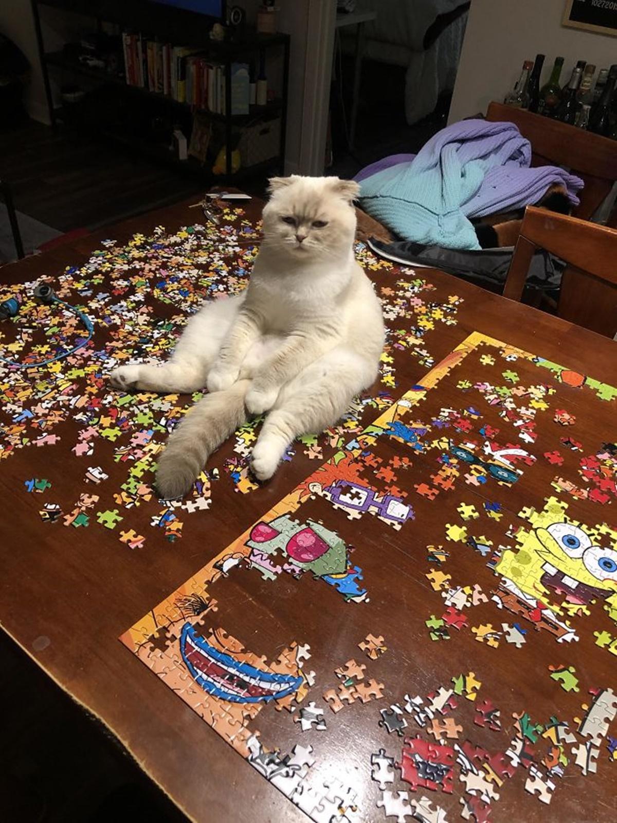 gatto stremato