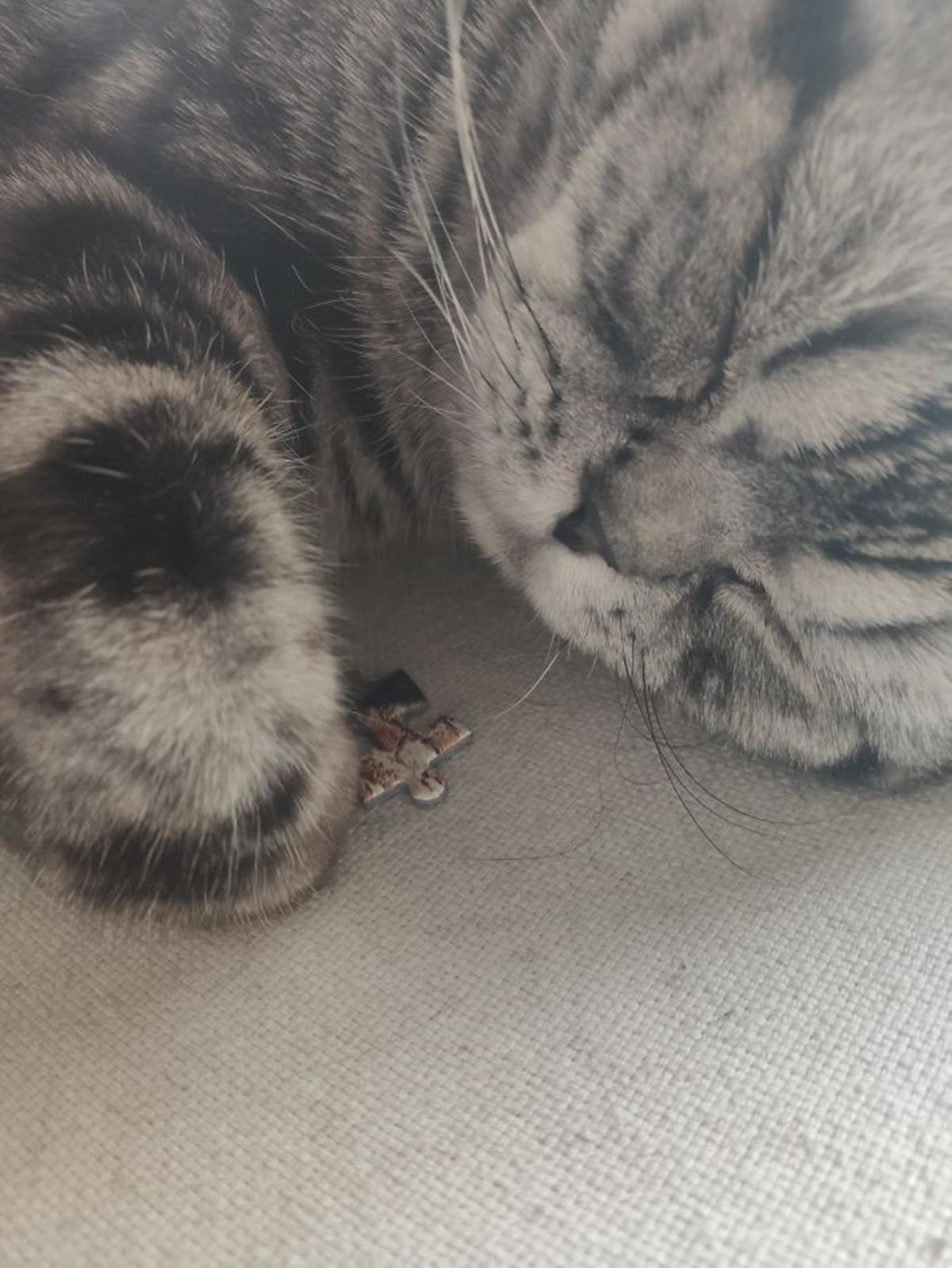 gatto ruba pezzetto