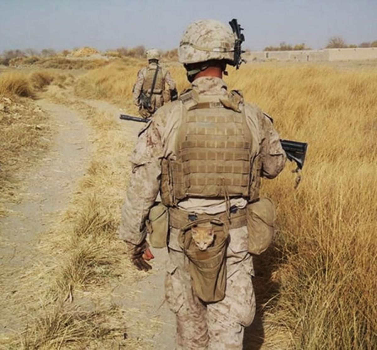 soldato con gattino in tasca