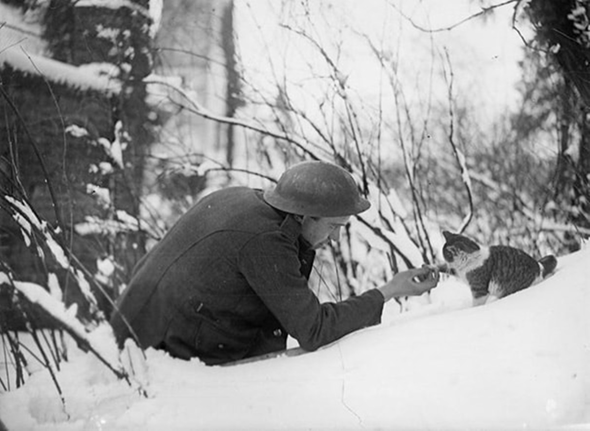 gatto stringe la mano al soldato