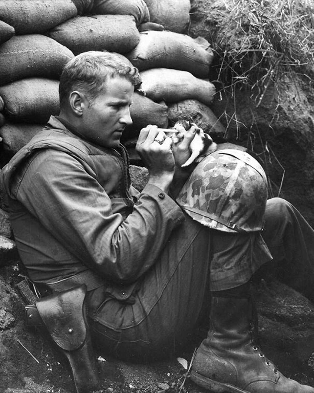 soldato e gatto in trincea