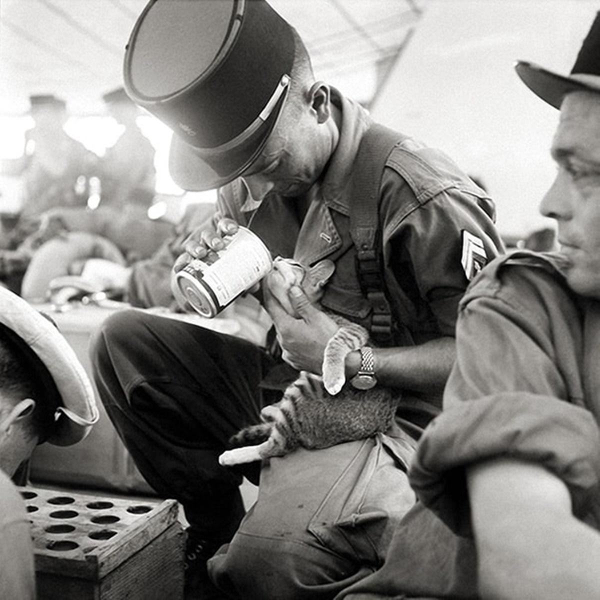 soldato dà da mangiare a gatto