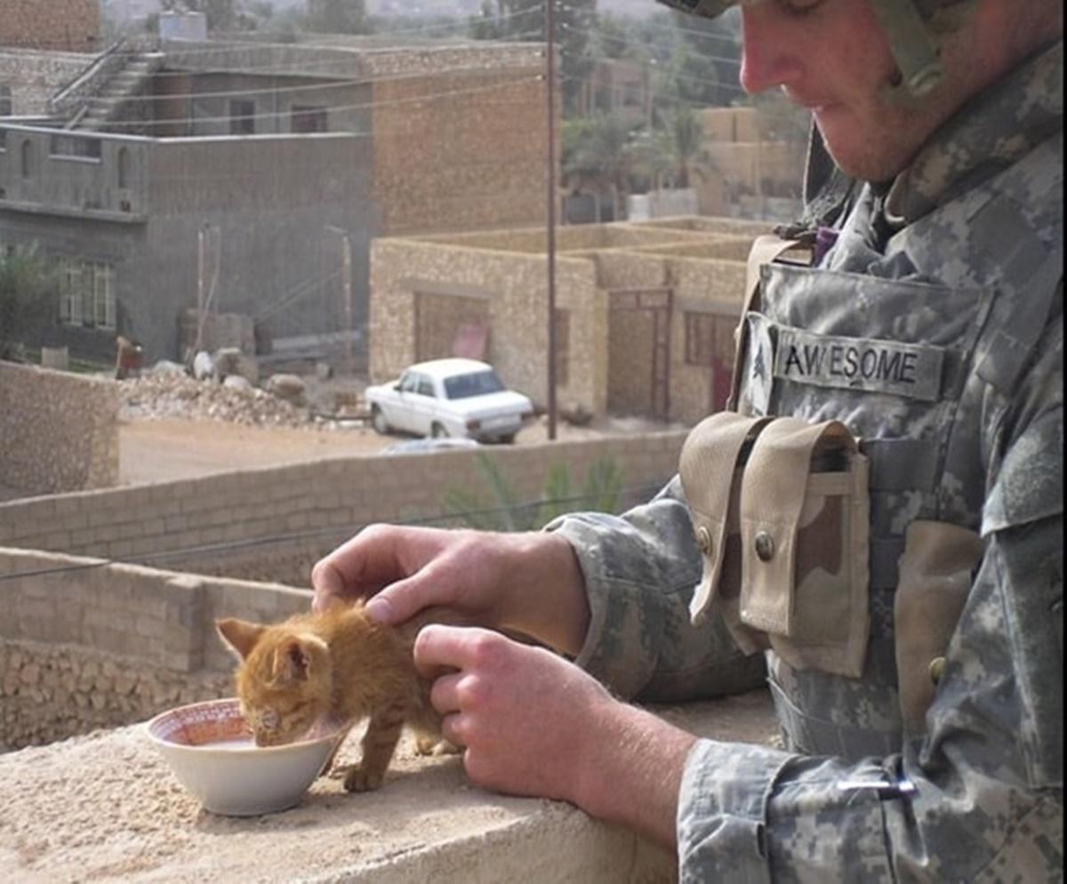 soldato dà da bere al gatto