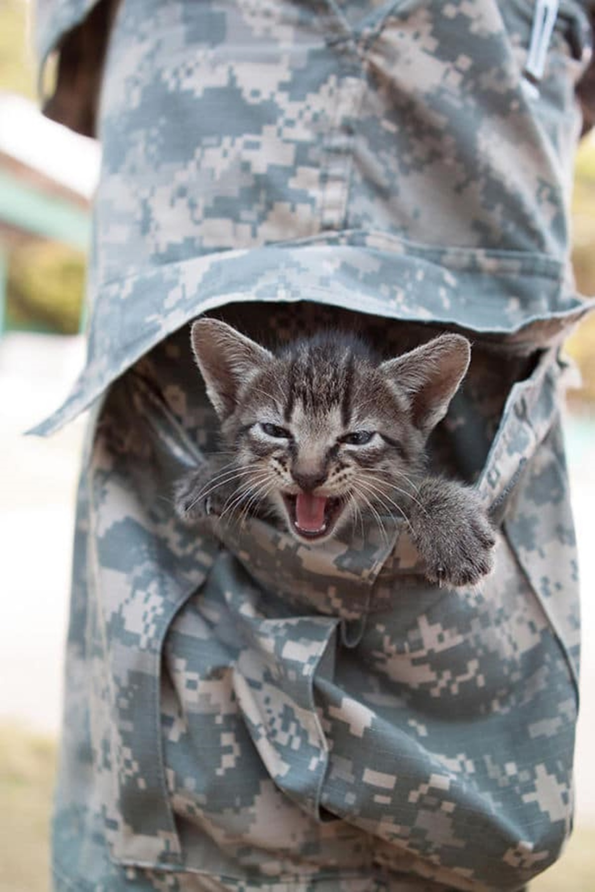 gatto nella tasca