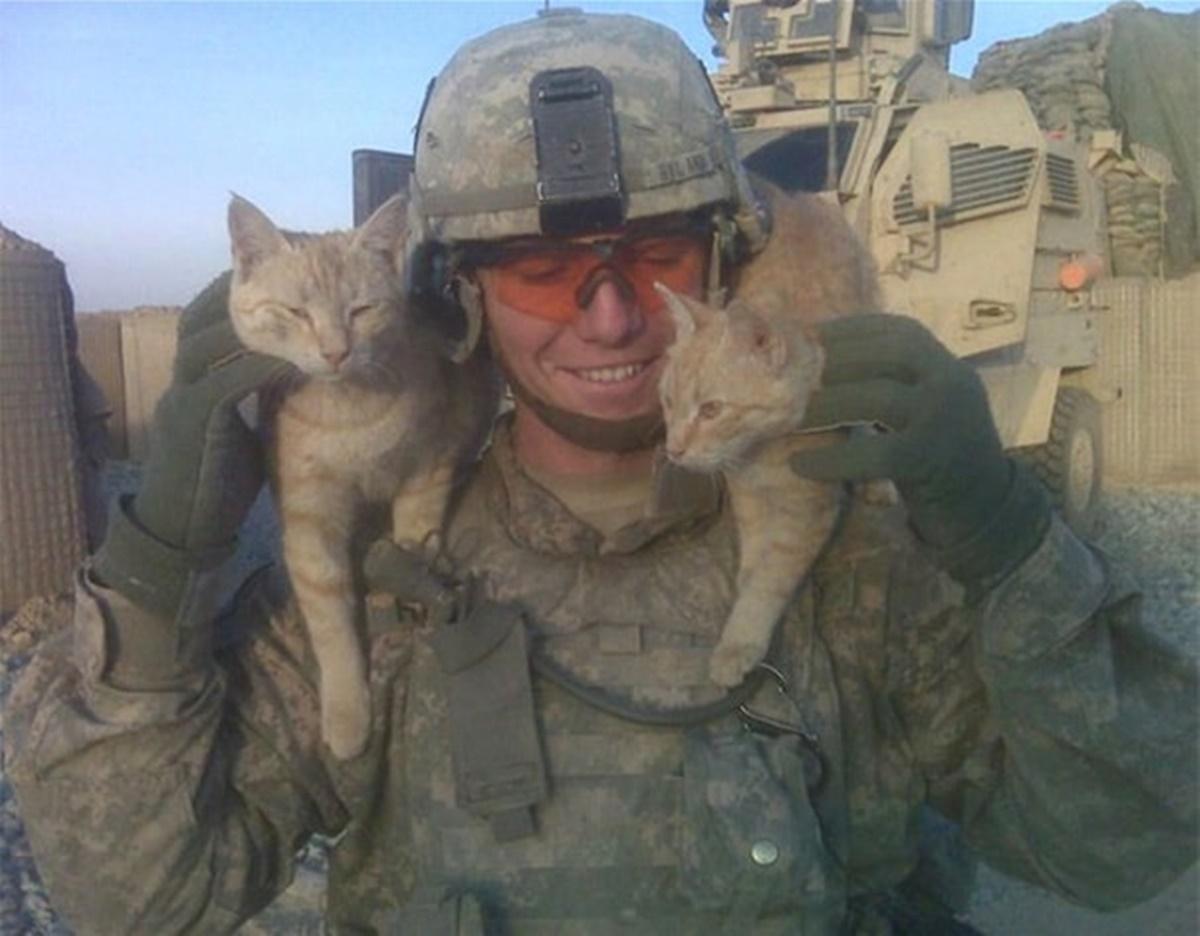 gattini giocano con soldato