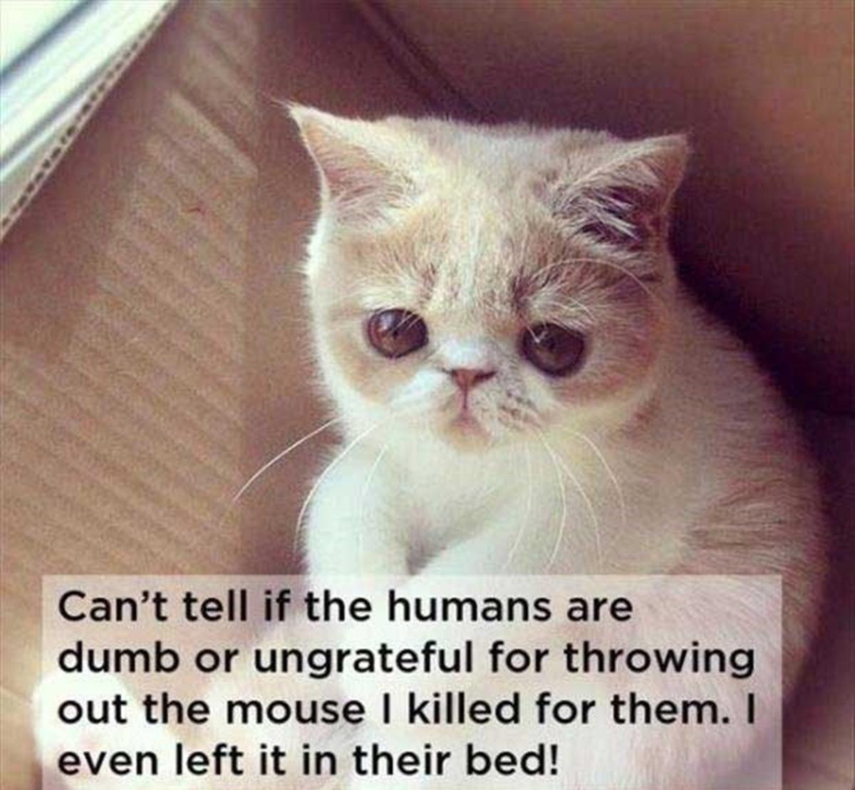 gatto che ha portato topo al padrone
