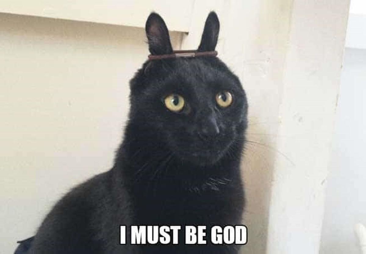 gatto divinità