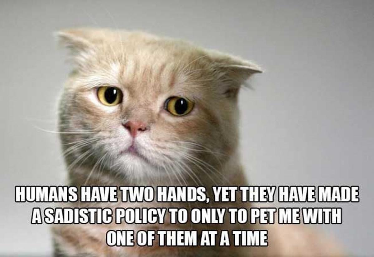 gatto insoddisfatto