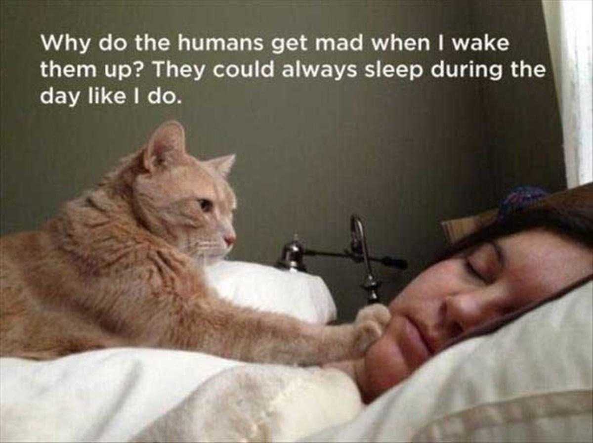 gatto sveglia padrona