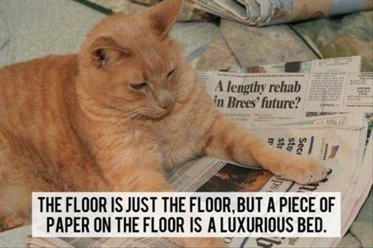 gatto con giornali