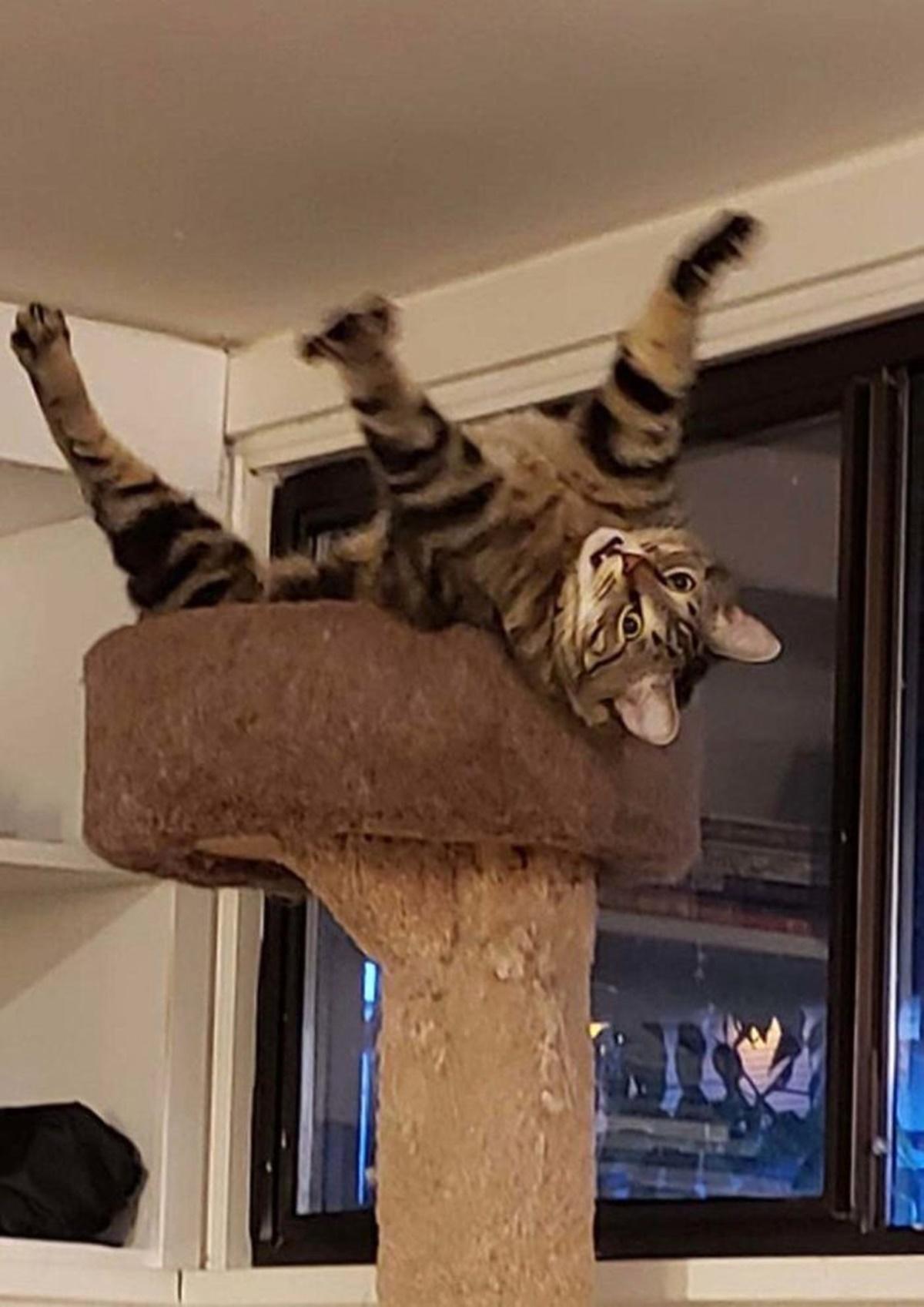 gatto felice su alberello